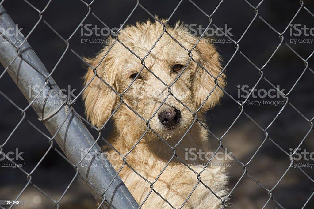 Unhappy dog royalty-free stock photo