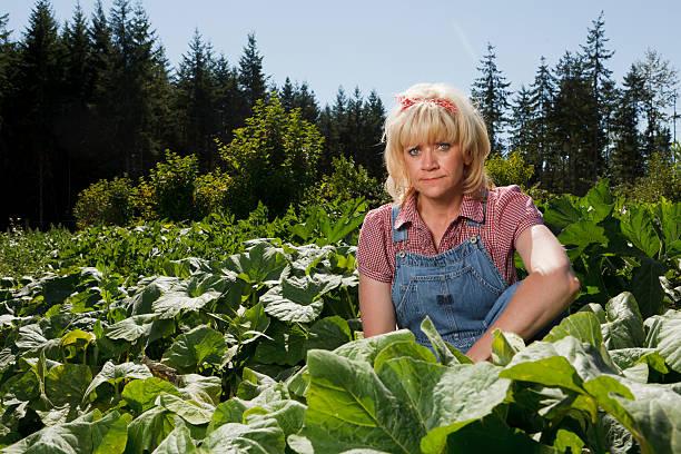 Unhappy Harvest stock photo