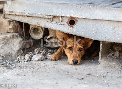 istock Unhappy homeless dog that lives underground 621849104