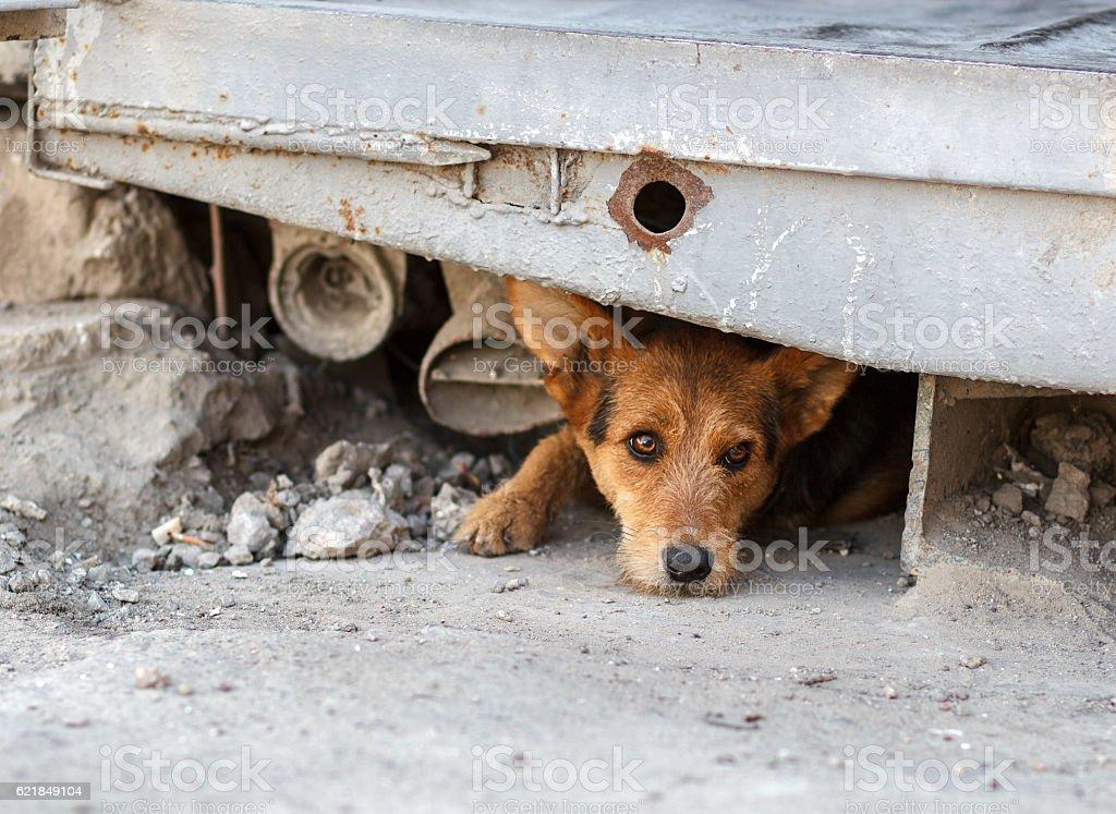 Unglücklich Obdachlosen Hund, das Leben der U-Bahn – Foto