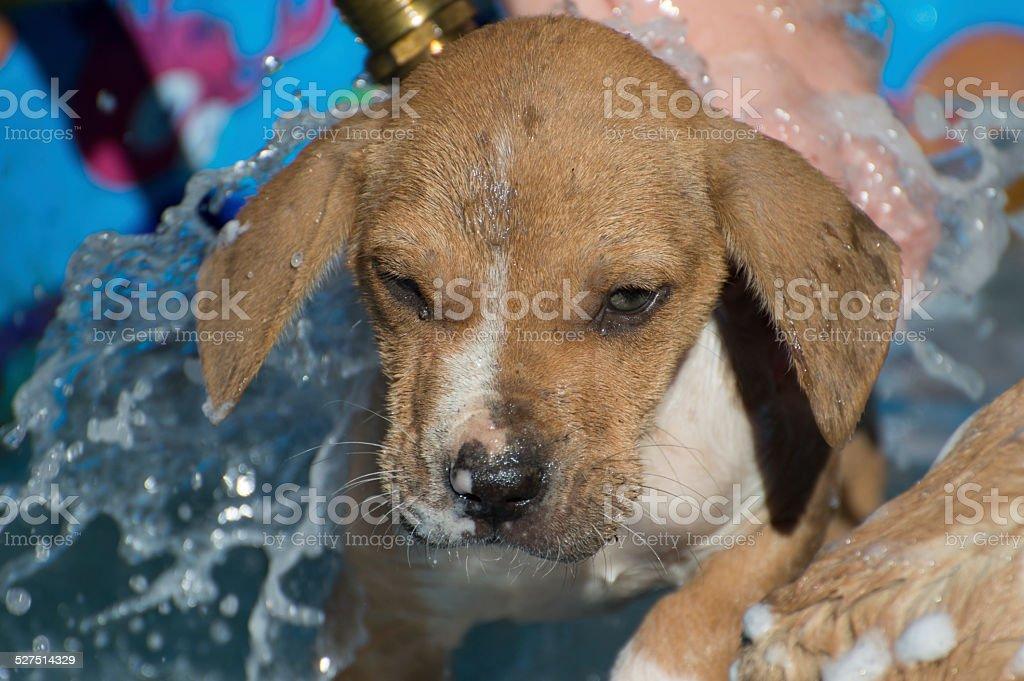 Unhappy Puppy stock photo