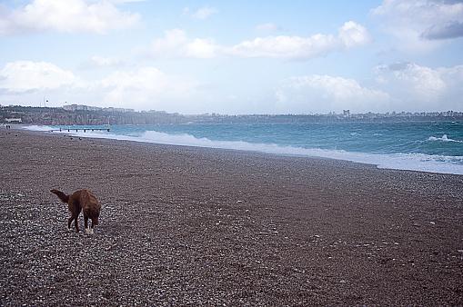 unhappy stray dog