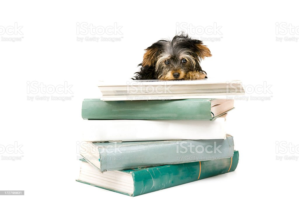 unhappy student stock photo