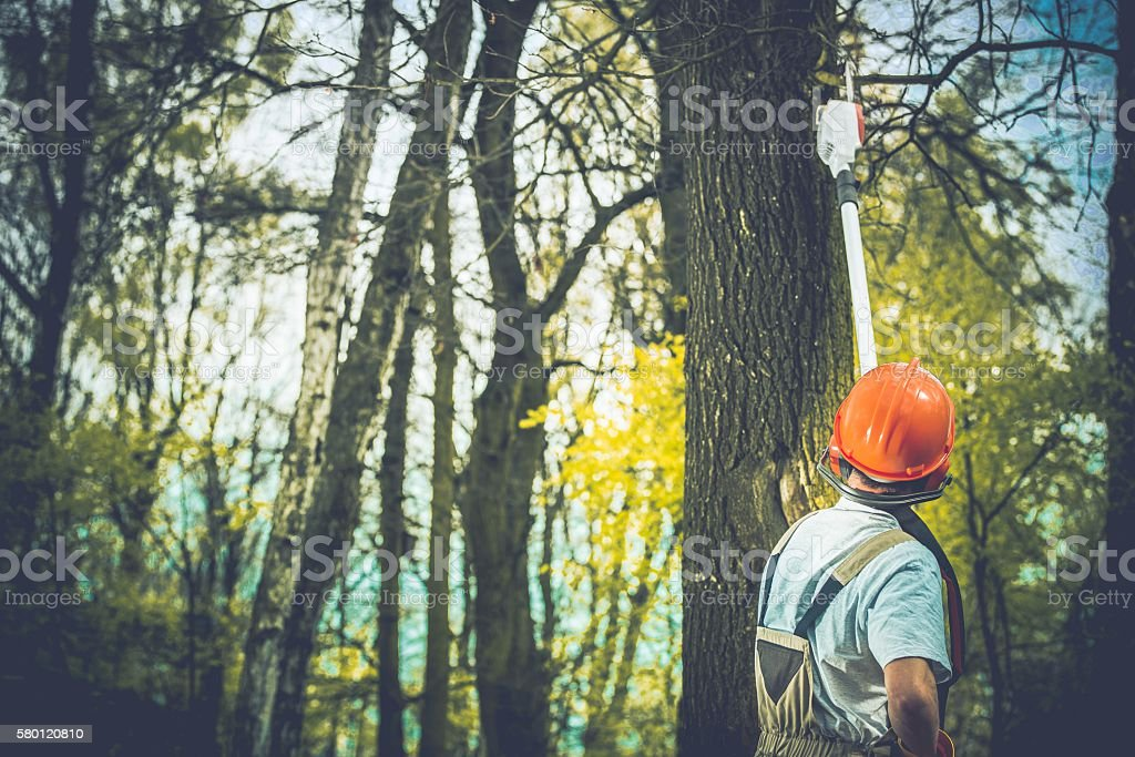 Unhealthy Tree Branches Cut stock photo