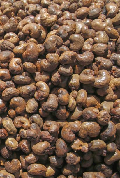 Unhulled cashew nut background,thailand