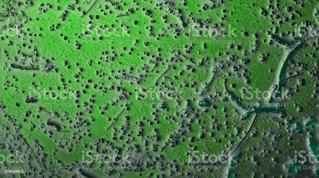 Jednokomórkowe roślin wodnych mikroskop widok życia