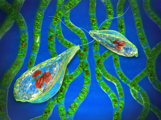Unicellular protozoa flagellated microorganisms on a blue background with filamentous algae Unicellular protozoa flagellated microorganisms on a blue background with filamentous algae. 3d image. protozoan stock pictures, royalty-free photos & images