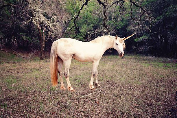 Unicorn photo realistic stock photo