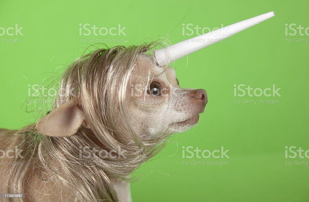 unicorn royalty-free stock photo