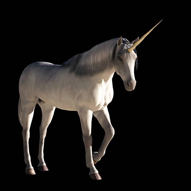 Unicorn stock photo