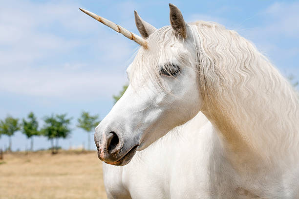 Unicorn Unicorn realistic photography horned stock pictures, royalty-free photos & images