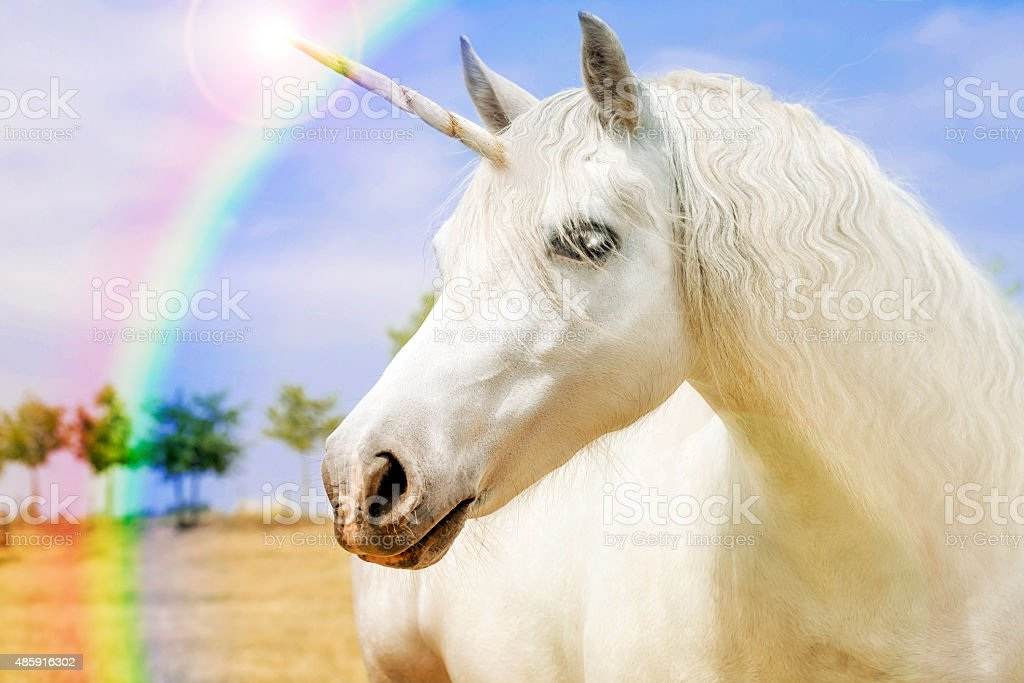 Unicorn Unicorn realistic photography 2015 Stock Photo
