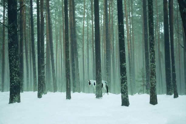 유니콘 신비한 안개 숲에 서입니다. 스톡 사진
