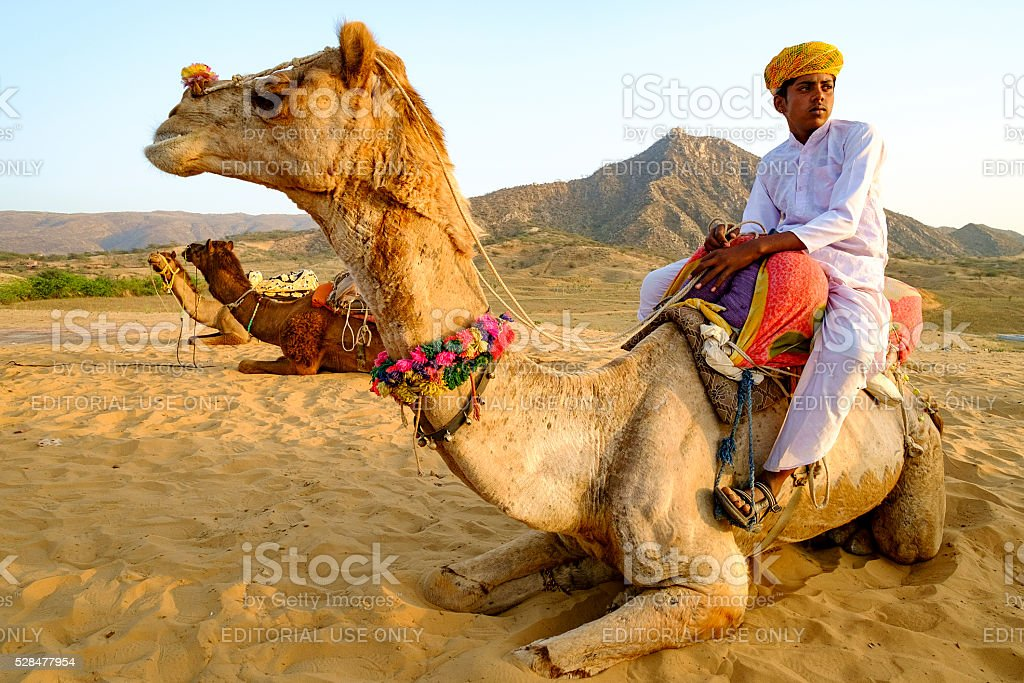 Unidentified camel boy sitting at the back of his camel stock photo