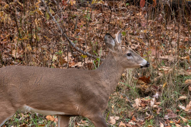 Unihorn Deer stock photo