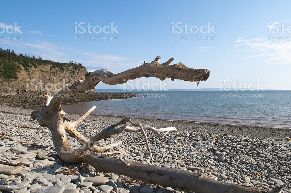 Unique Driftwood royalty-free stock photo