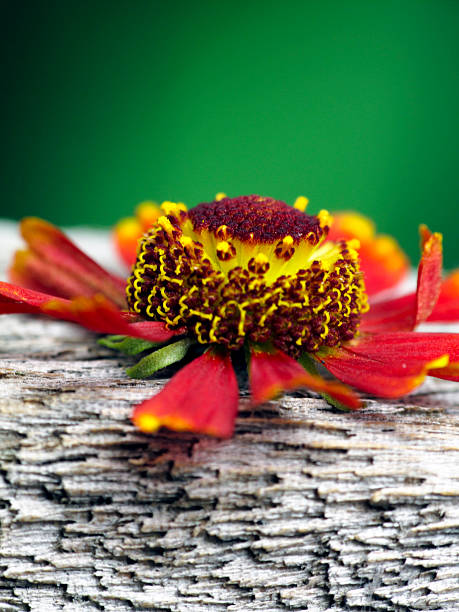 Unique flower on a wood bench stok fotoğrafı