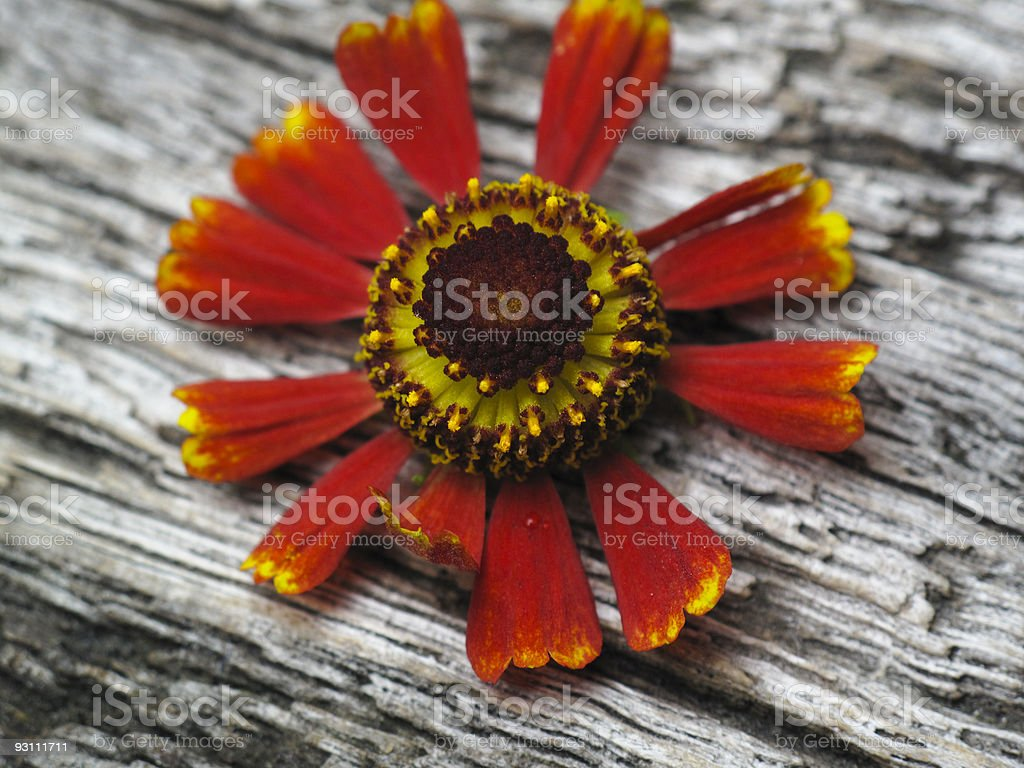 Unique flower on a wood bench - Royalty-free Ahşap Stok görsel