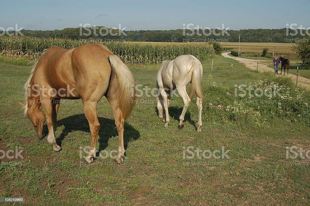 Unique Horse Colors stock photo