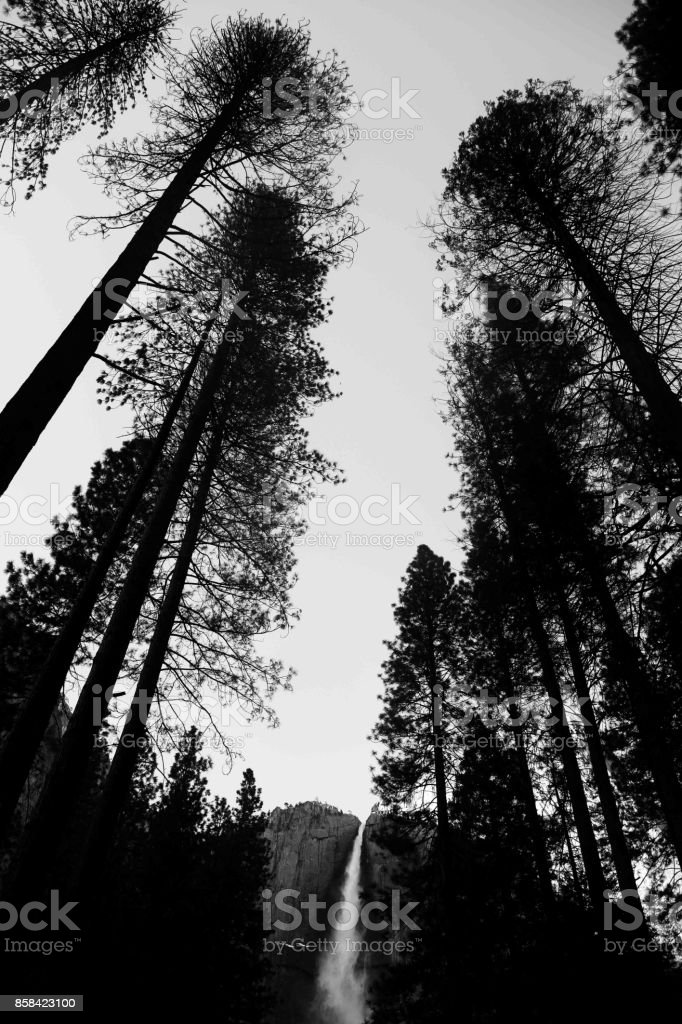 Unique shot of Yosemite falls with tall trees around it stock photo