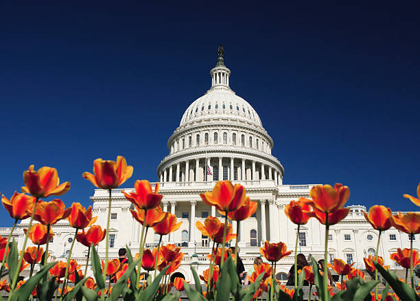 United States Capitol building view with red flowers