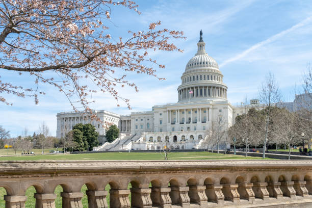 United States Capitol during national cherry blossom festival in Washington DC, USA stock photo