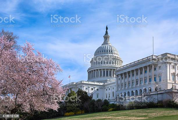 United states capitol west facade with cherry blossoms picture id473616108?b=1&k=6&m=473616108&s=612x612&h=qfc51ohkmj1bd0ucykoexk3yv1k1ypcrdwmlpcyav w=