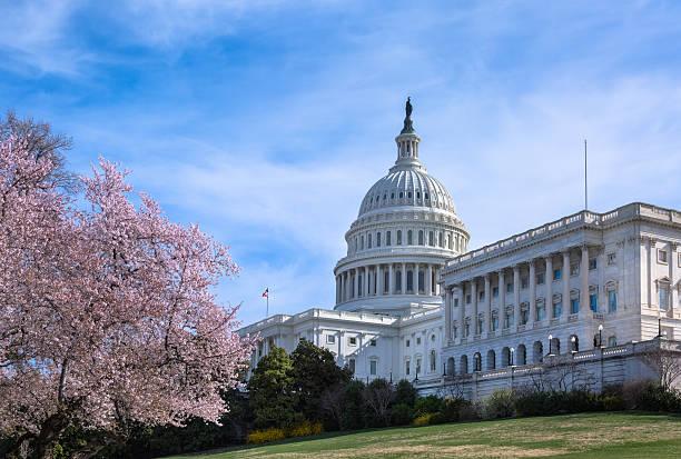 capitólio dos estados unidos em west fachada com flores de cereja - cherry blossoms imagens e fotografias de stock