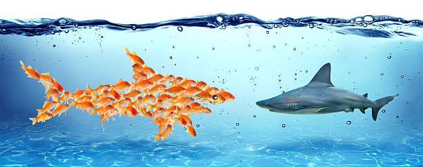 Unity is strength - teamwork concept - goldfish and shark stock photo