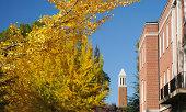 University autumn