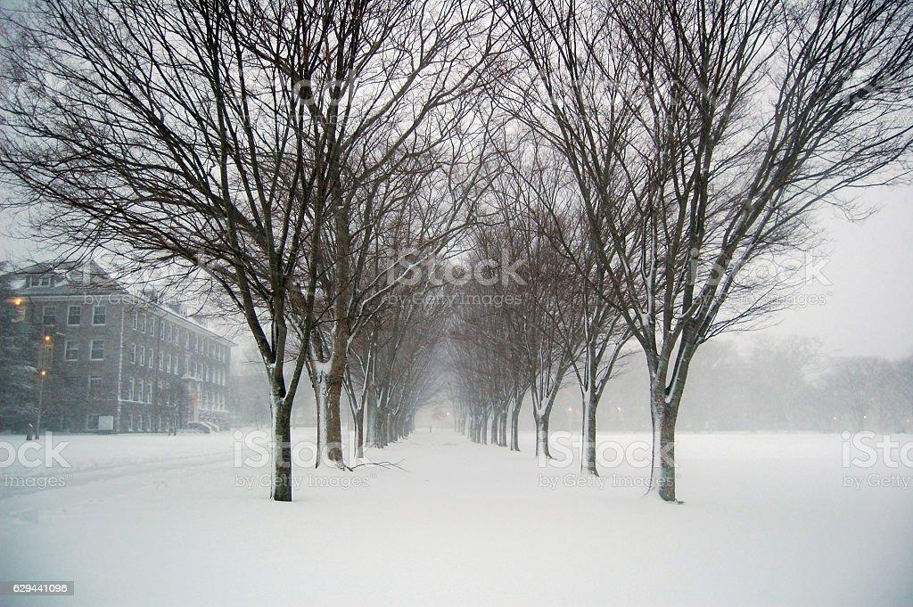 University of Rhode Island winter trees stock photo