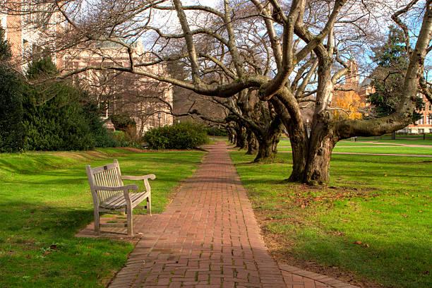 University of Washington Bench stock photo