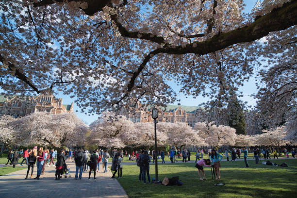 Royalty Free University Of Washington Pictures, Images and ...