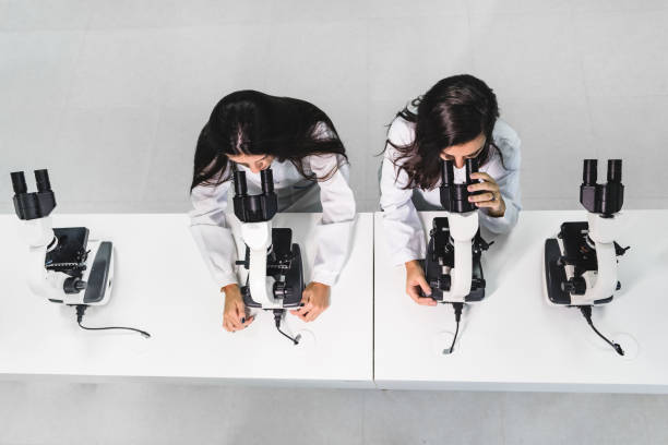 University students in the laboratory using microscopes stock photo