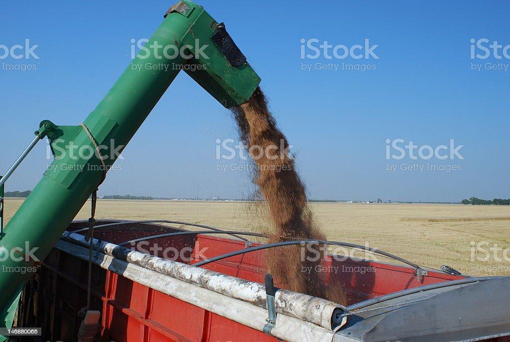 Unloading Grain stock photo