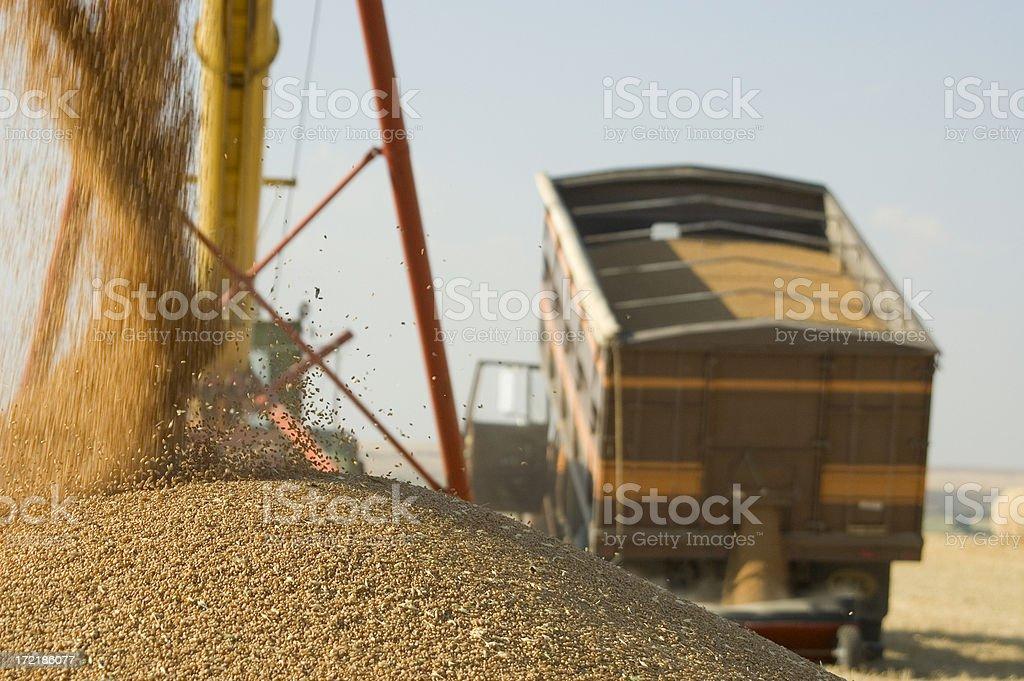 unloading grain truck royalty-free stock photo
