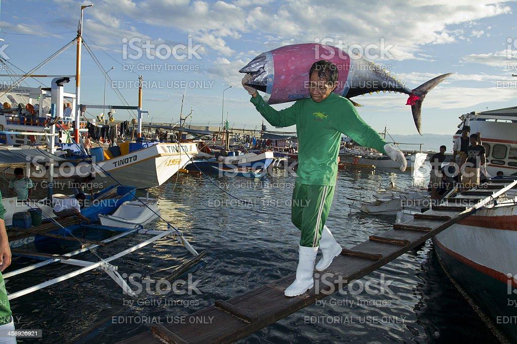 Unloading Yellow Fin Tuna royalty-free stock photo