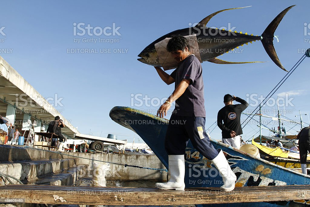 Unloading Yellowfin Tuna stock photo