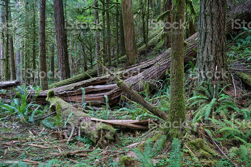 Unmanaged Forest Wilderness stock photo