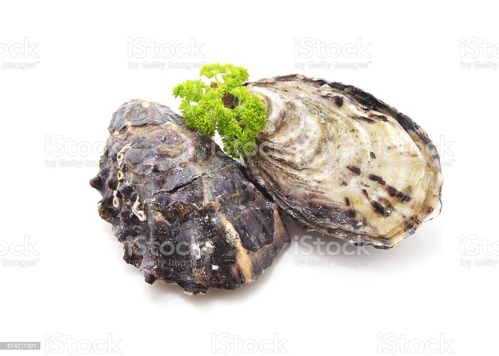 Unopened Oysters stock photo