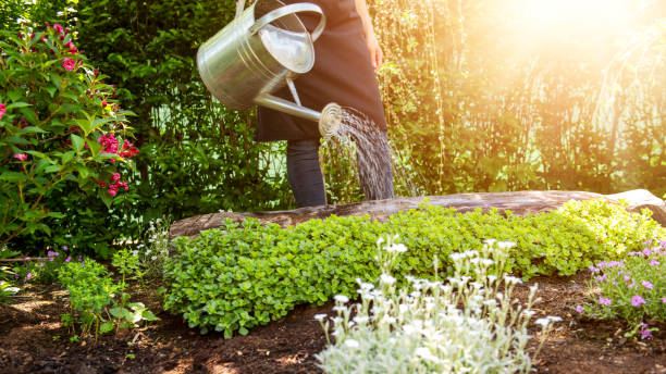 unrecognisable woman watering flower bed using watering can. gardening hobby concept. flower garden image with lens flare. - watering stock pictures, royalty-free photos & images