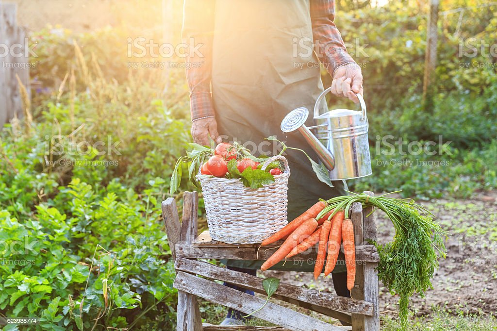 Unrecognizable farmer standing behind a basket with vegetables stock photo