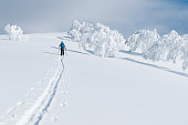 Unrecognizable active female tourist trekking on her skis up the untouched snowy hill in Niseko. Young woman on fun ski touring journey leaving trails with her skis and poles in the fresh powder snow.