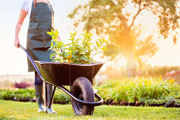 unrecognizable gardener carrying seedlings in wheelbarrow, sunny - kruiwagen stockfoto's en -beelden