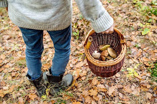 unrecognizable man holding basket with mushooms, autumn forest - höst plocka svamp bildbanksfoton och bilder