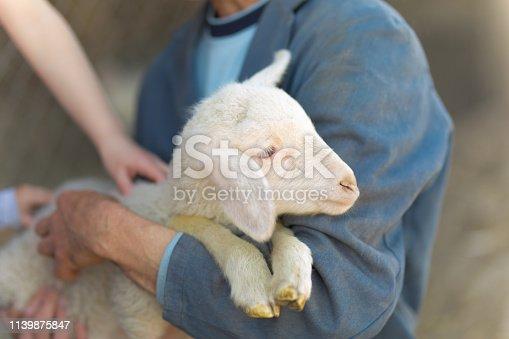 Unrecognizable man holding little lamb