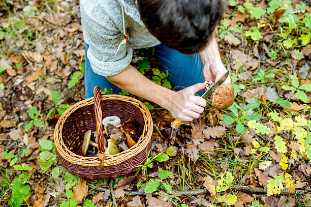 unrecognizable man in forest holding mushoom, cleaning it - höst plocka svamp bildbanksfoton och bilder