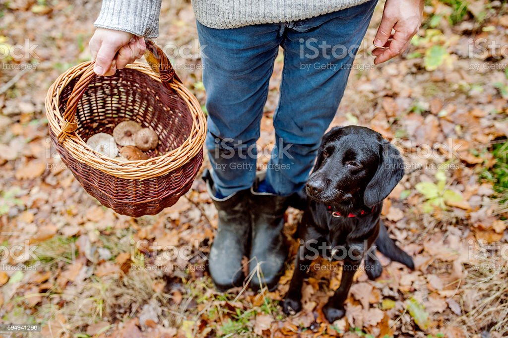 Unrecognizable man with dog holding basket with mushooms, forest stock photo