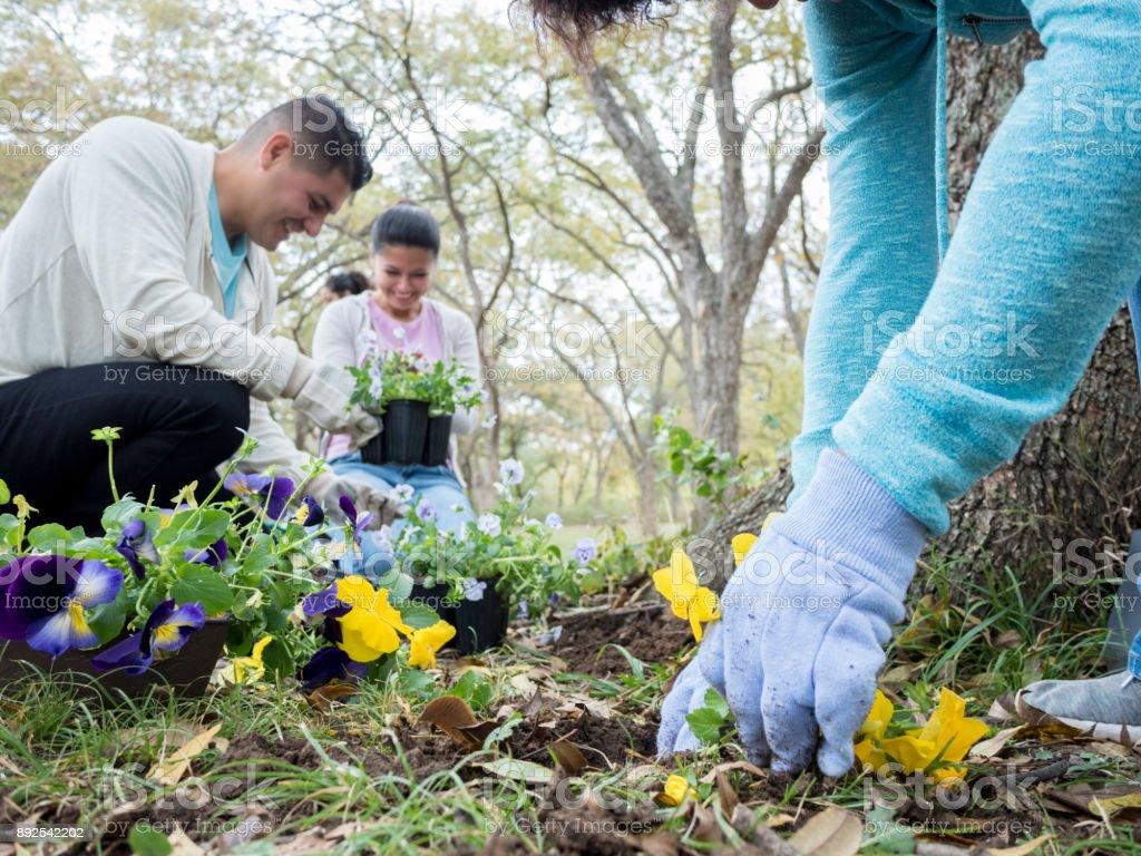 Personne méconnaissable plantes fleurs avec des amis pour la communauté - Photo