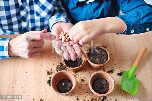 Hands of senior grandfather and his grandson putting seeds in the soil. Spring time.